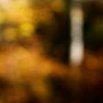 unfocused forest
