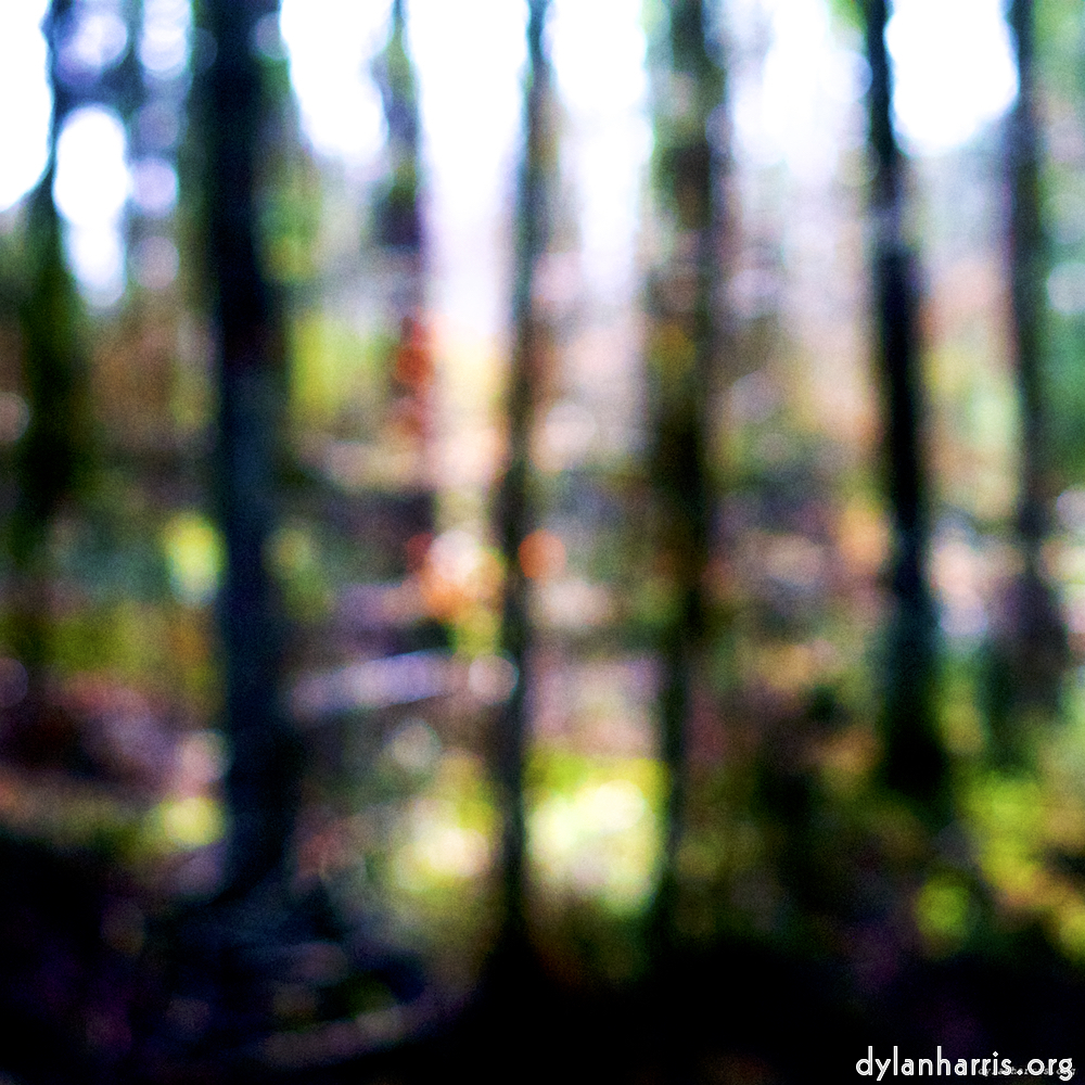 blurry trees in lots of colour