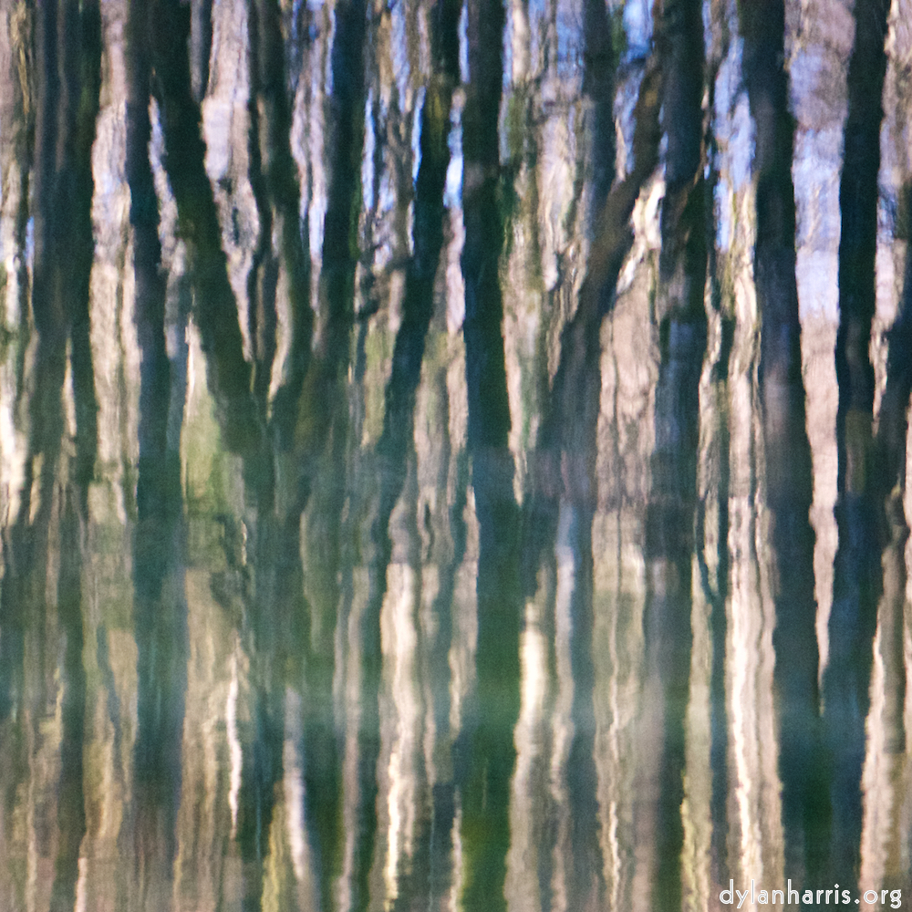 image: reflected trees