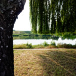 image: a tree with a fringe overlooking the moselle