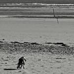 alnmouth foto's