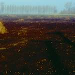 image: Image from the photoset 'fen (iii)'.