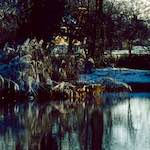 Image from the photoset 'st. neots park (vi)'.